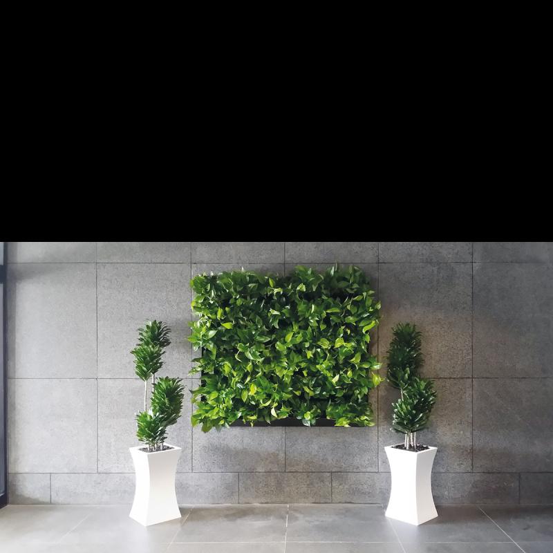 Mur plante réel