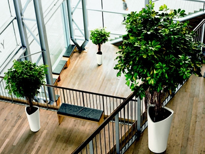 Plantes en location ou achat